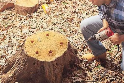 How To Remove A Tree Stump Naturally